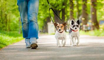 Soins et promenades d'animaux